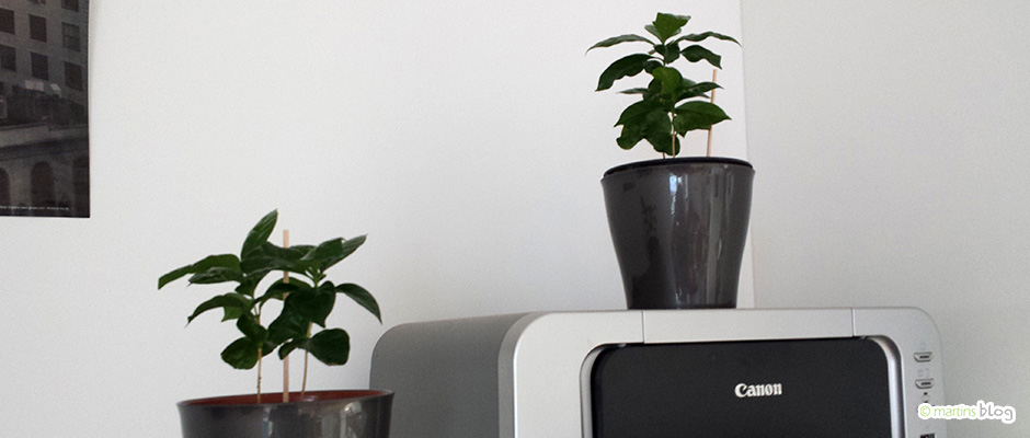 Kaffeepflanzen am Druckerregal