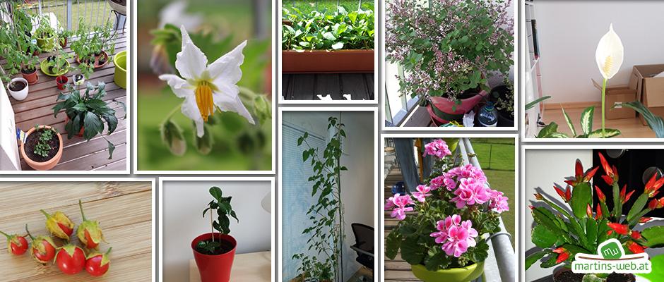Pflanzenrückblick