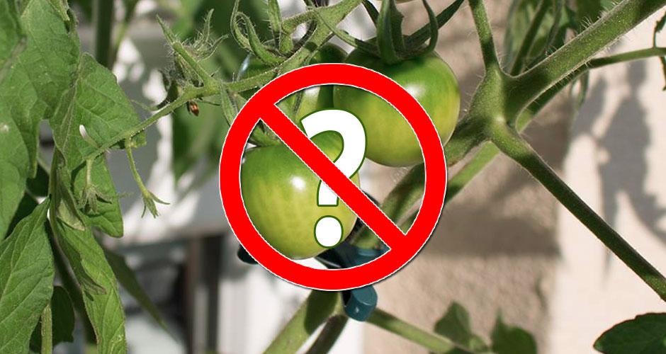 keine Tomaten