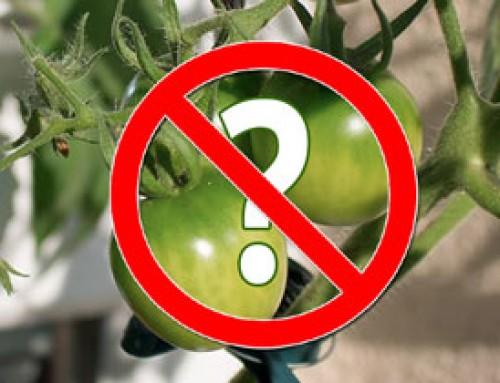 2017 ein tomatenloses Jahr?