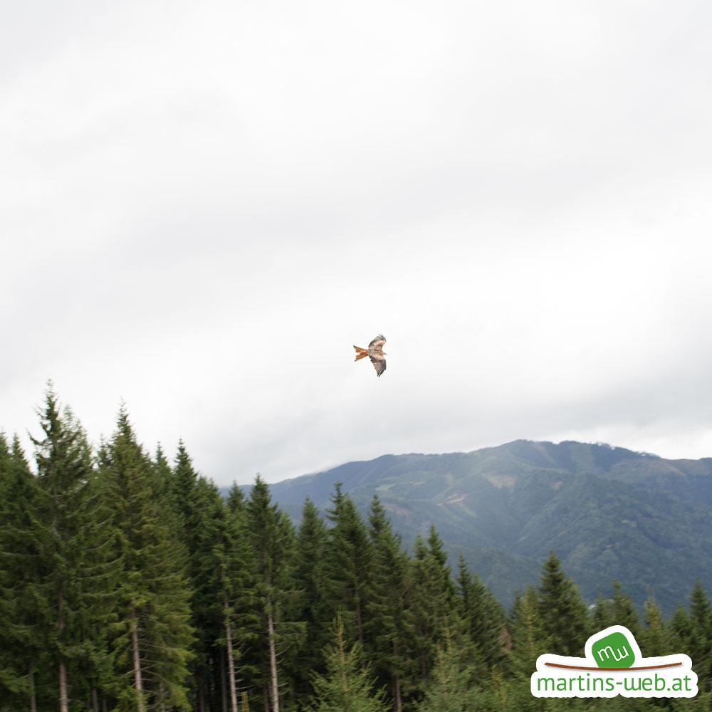 Der wilde Berg - Greifvogelschau