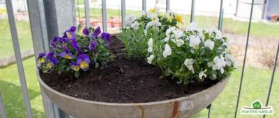 Balkon- und Zimmerpflanzen 2018